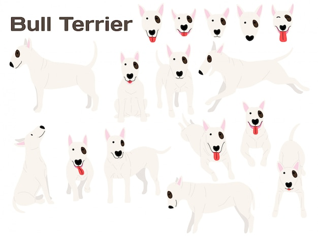 Bull terrier dog in action