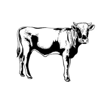 황소 어린 송아지 버팔로 흑백 그림. 손으로 그린 스케치