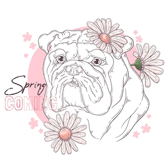 Bulldog with flowers isolated on white
