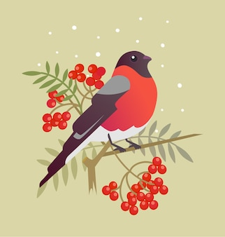 Bullfinch christmas bird cartoon art illustration