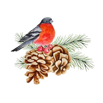Bullfinch sits on a pine tree branch with pine cones and berries.