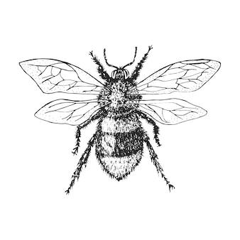 Шмель жук-жук и пчелы многих видов в старинном старинном стиле рисованной гравюры на дереве.