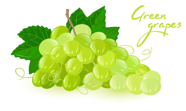 Bunch of green grapes with leaves
