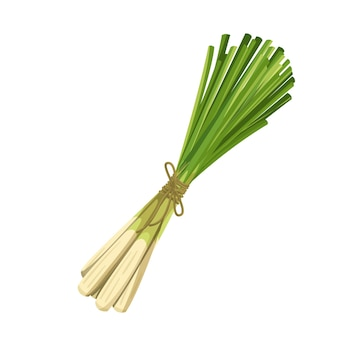 Bunch of green lemongrass, vegetarian food, healthy menu. growing herbs, salad and meals. isolated vector illustration in cartoon style.