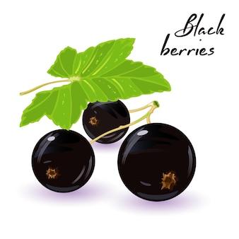 Bunch of juicy blackcurrant sweet berries with green leaves