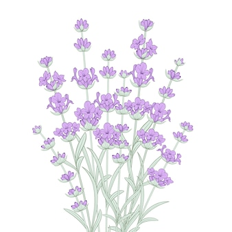 Bunch of lavender flowers.