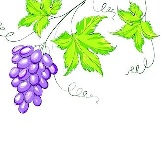 Гроздь виноградной лозы.