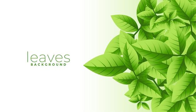 텍스트 공간을 가진 녹색 잎 배경의 무리