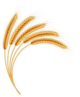 Куча колосья пшеницы, сушеные цельные зерна реалистичные иллюстрации