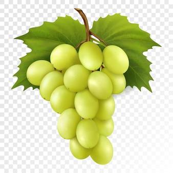 透明な背景に分離されたブドウの葉を持つ黄色または緑のブドウの束。ブドウの房。新鮮な自然食品、デザート。農業デザインのための現実的な3dベクトルイラスト。