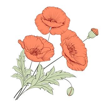 Bunch poppy flowers.