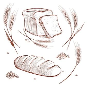 Bunch of wheat ears and bread hand drawn vector illustration