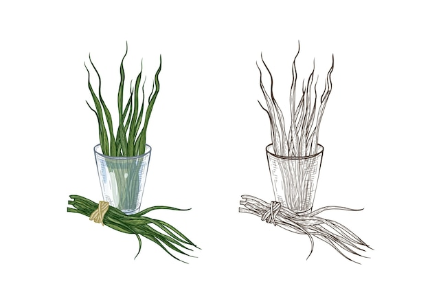 Bundle of colorful and monochrome drawings of spirulina algae in glass