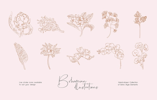Bundle of detailed botanical drawings of blooming wild flowers collection of hand drawn plants