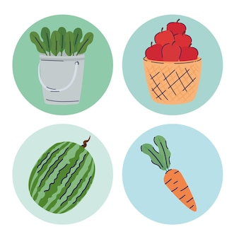 Bundle of four fruits and vegetables farm products  illustration