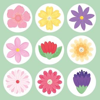 Bundle of nine beauty flowers spring season set icons  illustration
