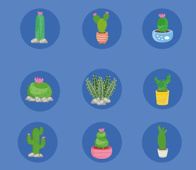 Bundle of nine cactus plants set icons illustration design