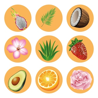 Bundle of nine tropical fruits and plants set icons  illustration