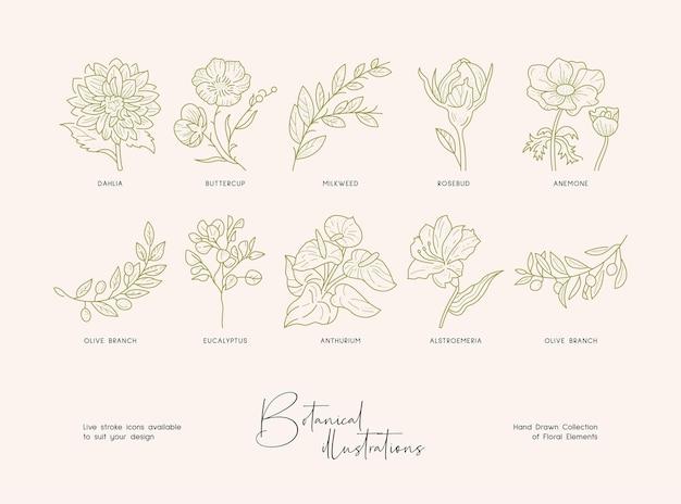 손으로 그린 식물의 개화 야생 꽃 컬렉션의 상세한 식물 그림 묶음