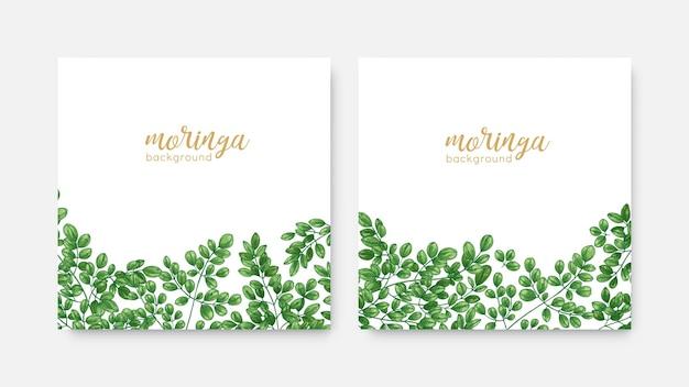 緑のミラクルツリーまたはmoringaoleiferaの葉とエレガントな正方形の背景のバンドル。