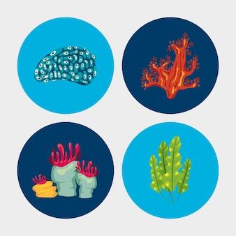 4つの珊瑚の海の生物の自然要素の図のバンドル
