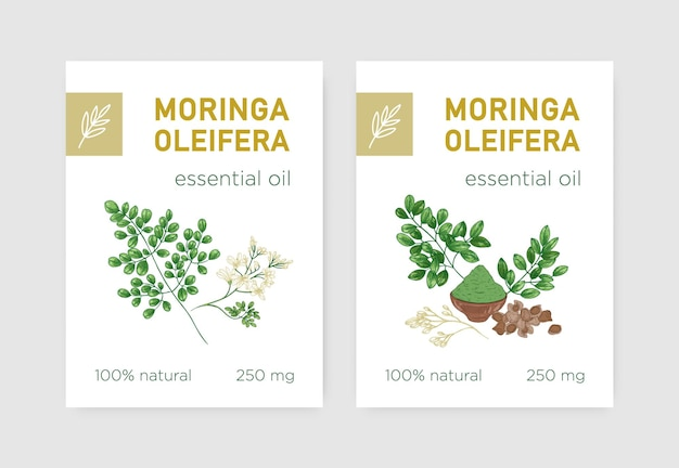 Miracle tree 또는 moringa oleifera가 있는 레이블 번들. 식물 요법에 사용되는 식용 초본 식물이 있는 태그 세트. 천연 제품에 대한 현실적인 빈티지 스타일의 식물 벡터 삽화.