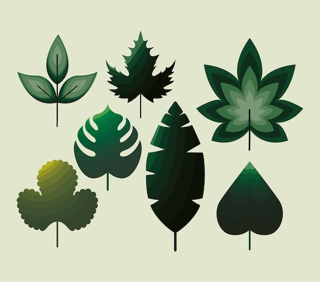 Связка листьев значков с дизайном иллюстрации зеленого цвета