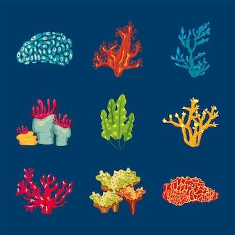 9 개의 산호 바다 생활 자연 요소 그림의 번들