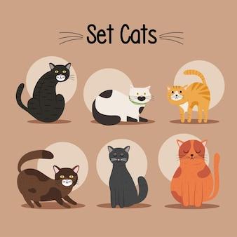 여섯 고양이 differents 색상 마스코트 및 글자 번들