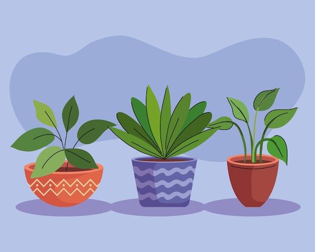 Связка из трех комнатных растений в керамических горшках