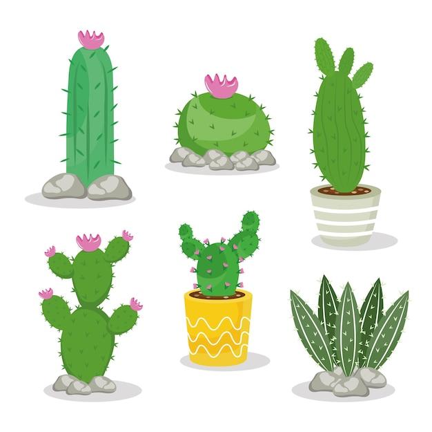Bundle of six cactus plants set icons illustration design