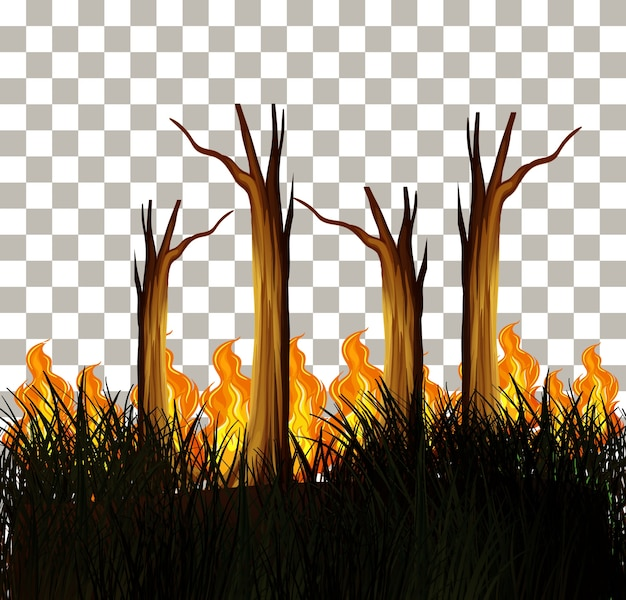 Bush fire on transparent