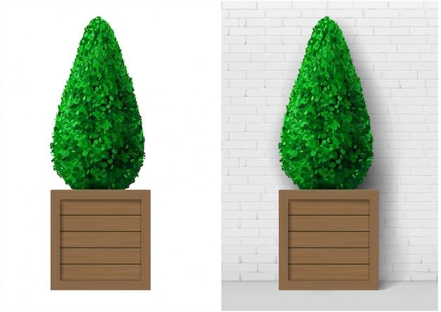 Bush plant in modern wooden pot