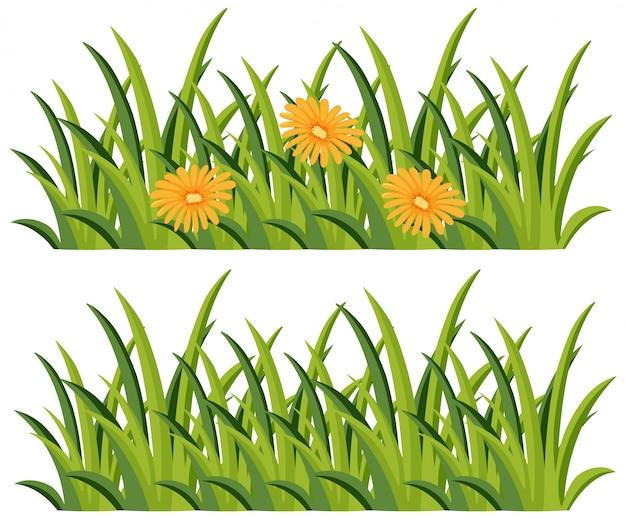 花あり/なしの茂み
