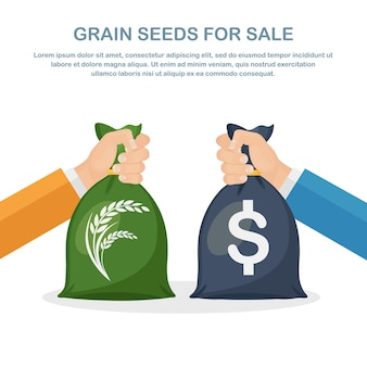 Businessman hands hold bags of money, grain sale crops, buy grain. agricultural income, agribusiness