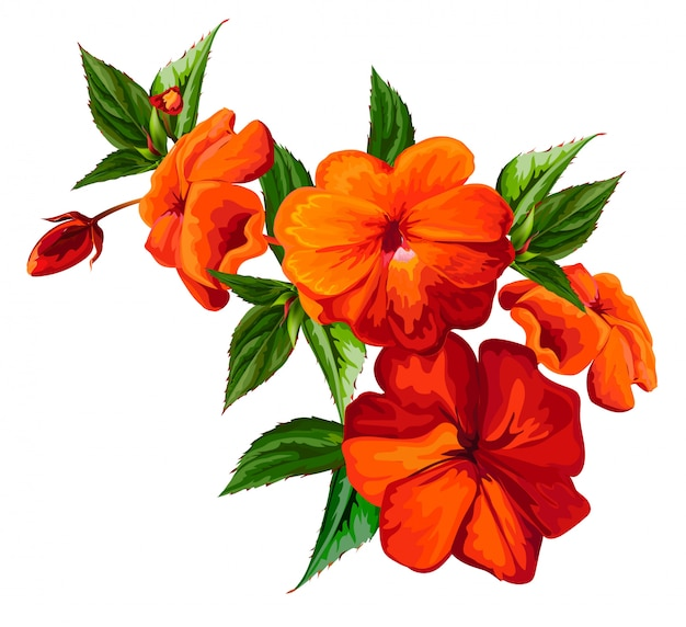Busy lizzie flower