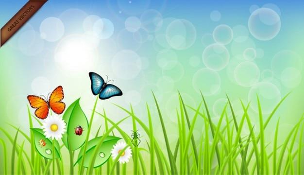 Buterflies on grass illustration