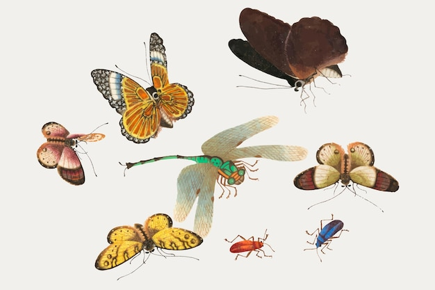 Butterflies, dragonfly and insects