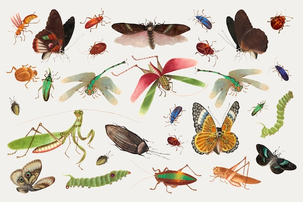 Butterflies, grasshoppers and insects vector vintage drawing collection