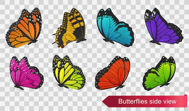 Butterflies side view isolated on transparent background. vector illustration