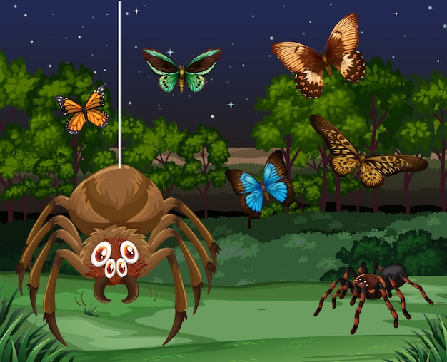Butterflies and spider at night