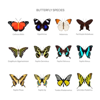 Butterflies vector set in flat style design. different kind of butterfly species collection. isolated