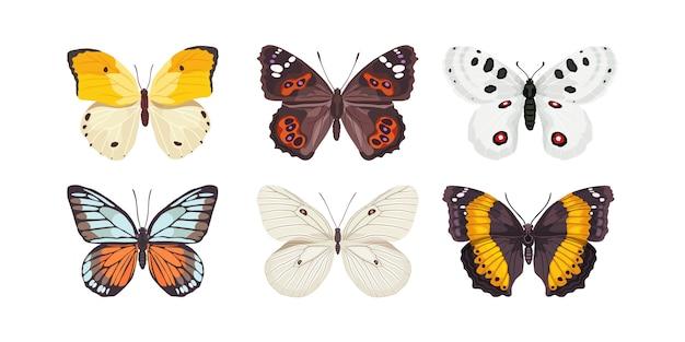 나비. 아름다운 곤충 세트