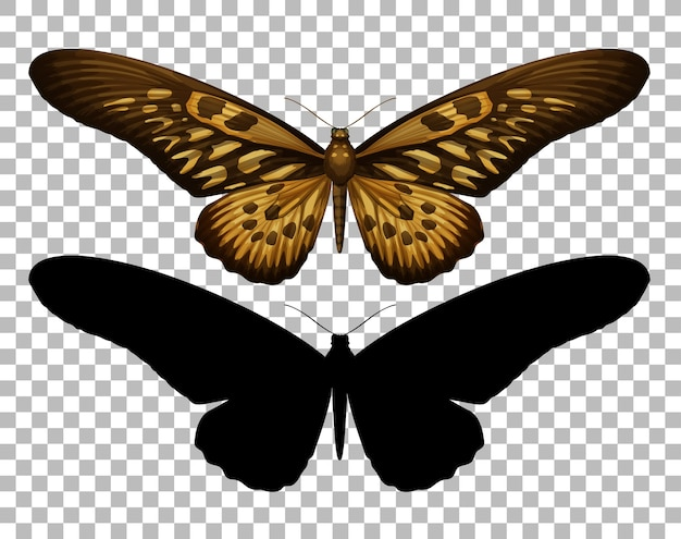 透明な背景に蝶とそのシルエット