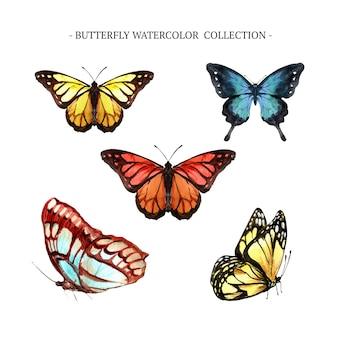 Butterfly collection with watercolor