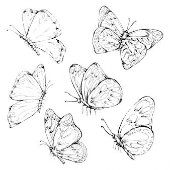 Butterfly hand drawn in vintage style