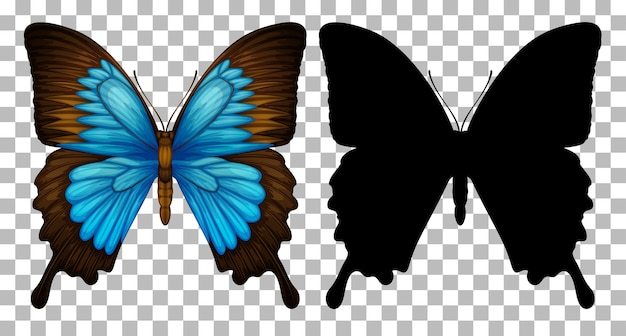 Butterfly and its silhouette on transparent background