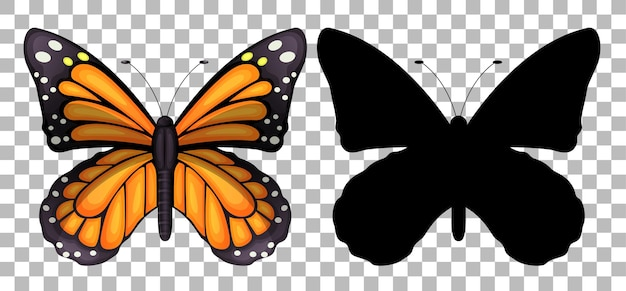 Butterfly and its silhouette on transparent