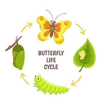 Butterfly life cycle. insect emergence, transformation or metamorphosis. caterpillar development stages