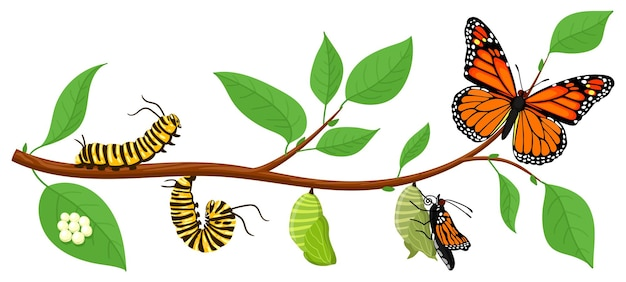 蝶のライフサイクル